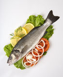 Freshly Bass Fish with vegetables Stock Photography