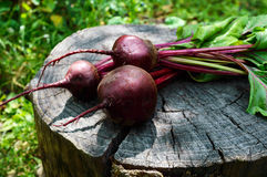 Freshly  beets on an old tree stump.  Royalty Free Stock Photos
