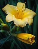 Freshly Bloomed Flower. S in the garden stock image