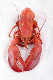 Freshly boiled lobster on a white kitchen paper Stock Image