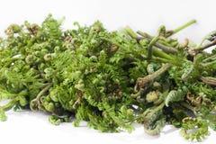 Freshly bracken fern Stock Image