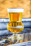 Freshly Brewed Beer Royalty Free Stock Photos