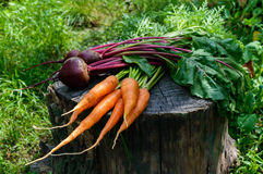 Freshly carrots and beets on an old tree stump Royalty Free Stock Image
