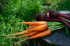 Freshly carrots and beets on an old tree stump Royalty Free Stock Photography