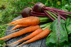Freshly carrots and beets on an old tree stump. Stock Image