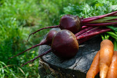 Freshly carrots and beets on an old tree stump Stock Photography