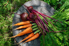Freshly carrots and beets on an old tree stump. Royalty Free Stock Photo