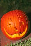 Freshly Carved Pumpkin Jack-o-lantern Royalty Free Stock Image