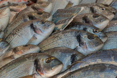 Freshly caught bream fish on display for sale. At farmer's market Stock Image