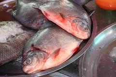 Freshly caught catfish in a fish market, Myanmar Burma Stock Images