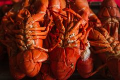 Freshly Caught Cooked Lobster. Live freshly caught lobster from Canada cooked for a Canada Day feast royalty free stock photography