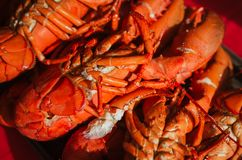 Freshly Caught Cooked Lobster. Live freshly caught lobster from Canada cooked for a Canada Day feast stock photos