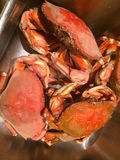 Freshly Caught Crab Seafood Dinner, Vancouver, British Columbia, Canada Royalty Free Stock Image