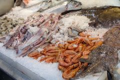 Freshly caught deep-water rose shrimp or Parapenaeus longirostris next to squids, angler and salmon fishes, striped. Prawns on the counter in a greek fish shop stock image