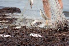 Freshly caught fish Stock Photo