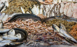 Freshly caught fish. For sale at Turkish street market Royalty Free Stock Image