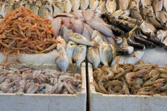 Freshly caught fish. For sale at Turkish street market Royalty Free Stock Photos