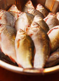 Freshly Caught Fish. A bowl of freshly caught silver fish Stock Image