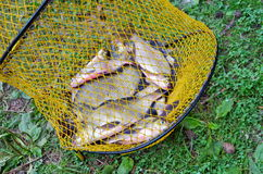 Freshly caught fish in cages Royalty Free Stock Photography