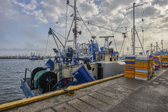 Freshly caught fish ( Cod fish ) is unloaded from a fishing boat Stock Photo