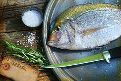 Freshly caught fish on cooking platter Royalty Free Stock Photo