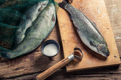 Freshly caught fish for dinner Royalty Free Stock Image