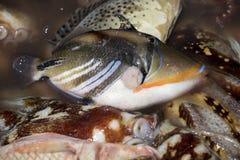 Freshly caught fish, Indian Ocean, Madagascar Royalty Free Stock Photo