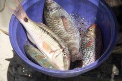 Freshly caught fish, Indian Ocean, Madagascar Stock Photo