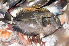 Freshly caught fish, Indian Ocean, Madagascar Stock Image
