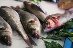 Freshly caught fish on sale at farmers market Stock Image