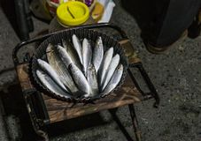 Freshly caught fishes from the Golden Horn, Istanbul. A bucket of mullet fish and a plastic box of sardine royalty free stock photos