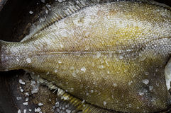 Freshly caught flatfish in a pan with salt Royalty Free Stock Image