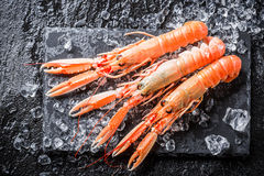 Freshly caught langoustines on ice Royalty Free Stock Photography