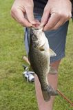 A freshly caught large mouth bass. Fish held by a fisherman stock photo