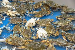 Live slue crabs at supermarket in Houston, Texas, USA Stock Images