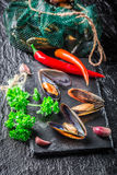Freshly caught mussels on crushed ice Royalty Free Stock Image