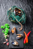Freshly caught mussels on ice Stock Photography
