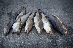 Fresh Norwegian fish Royalty Free Stock Photo