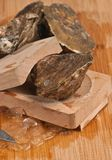 Freshly caught oyster ready to open Royalty Free Stock Images