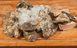 Freshly caught oyster ready to open Royalty Free Stock Image