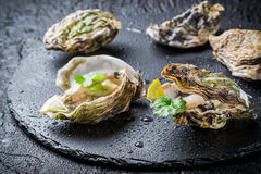 Freshly caught oyster in shell Stock Photo
