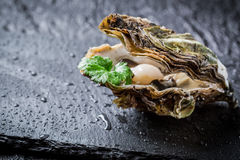 Freshly caught oyster in shell on ice Royalty Free Stock Images