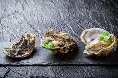 Freshly caught oysters Stock Images