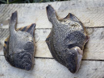 Freshly caught plaice. The Pacific ocean, Kamchatka.  Stock Image