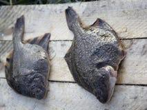 Freshly caught plaice. The Pacific ocean, Kamchatka Stock Image