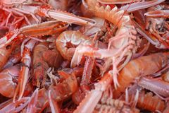 Freshly caught prawns Royalty Free Stock Photography