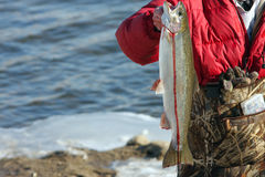 Freshly caught Rainbow Trout Royalty Free Stock Photos