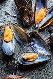 Freshly caught raw mussels. On black rock Royalty Free Stock Photography