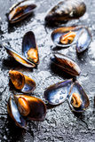 Freshly caught raw mussels Stock Photography