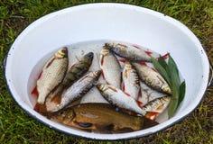 Freshly caught river fish Stock Photo